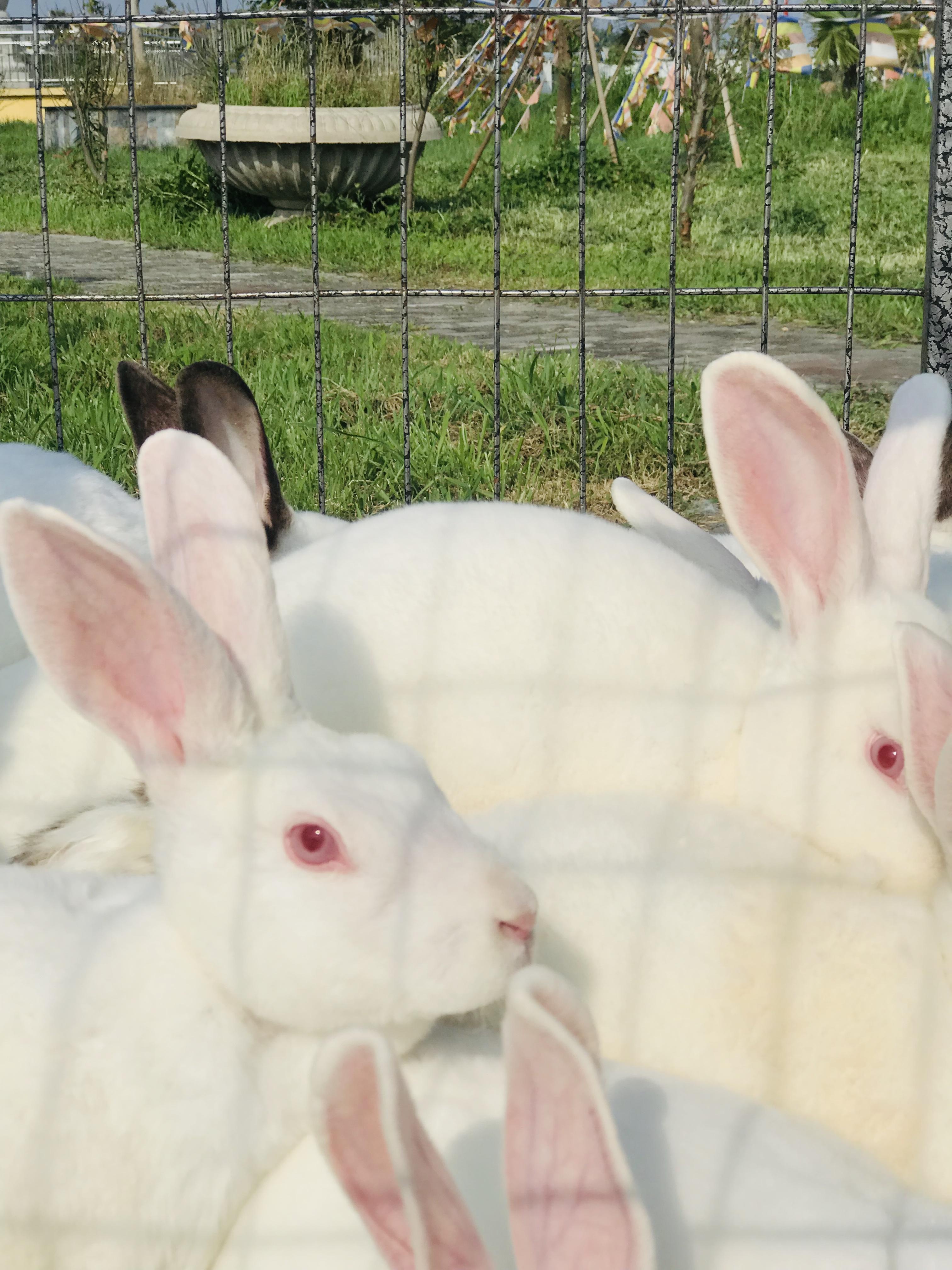 护生园救助的兔兔